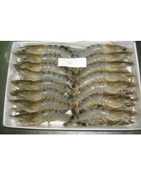 *Frozen White Shrimp H-On 50/60 (5 Small Boxes)